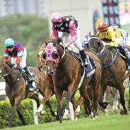 <p><span>Hong Kong International Races (Horse Racing)</span></p>